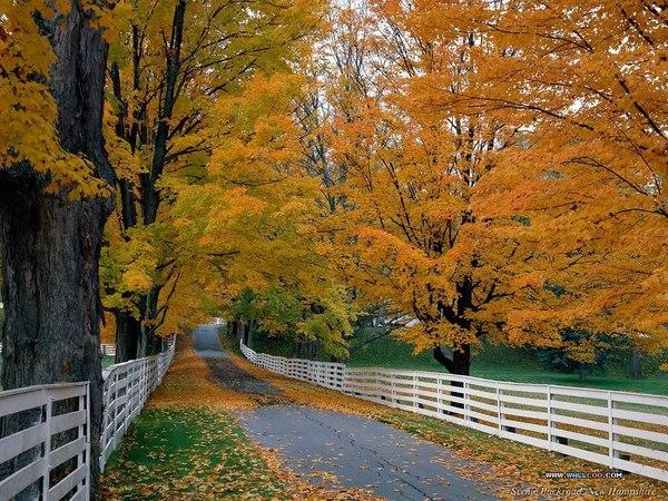 The Beautiful Scenery of Autumn 28