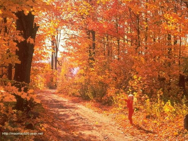 The Beautiful Scenery of Autumn 40