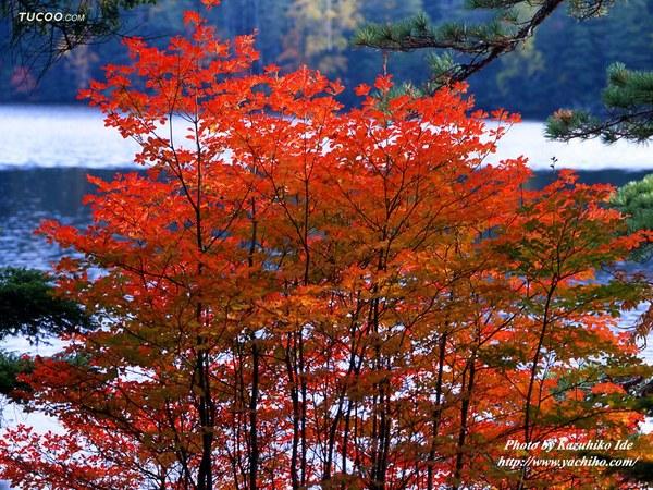 The Beautiful Scenery of Autumn 42