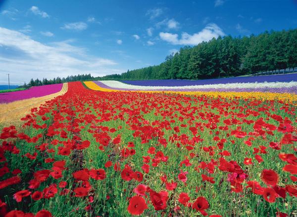 彩りの畑.jpg