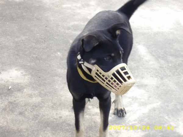 我家小狗1