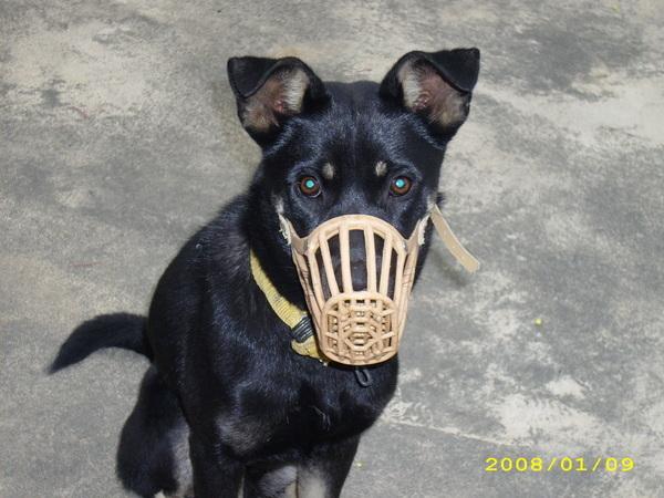 我家小狗3