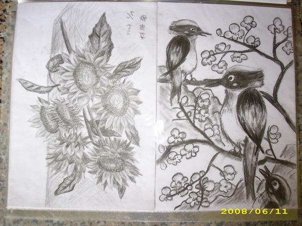 素描ㄉ向日葵/白頭翁