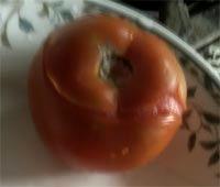 茄汁鮪魚義大利麵1