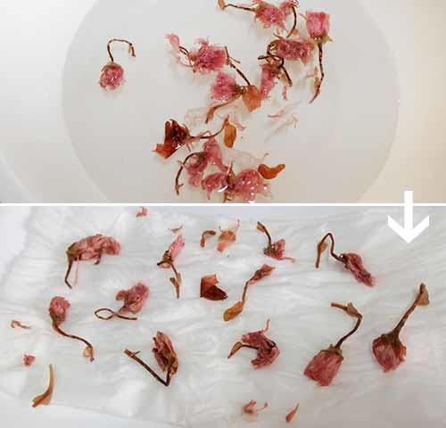 櫻花飯糰x照燒雞便當7.jpg