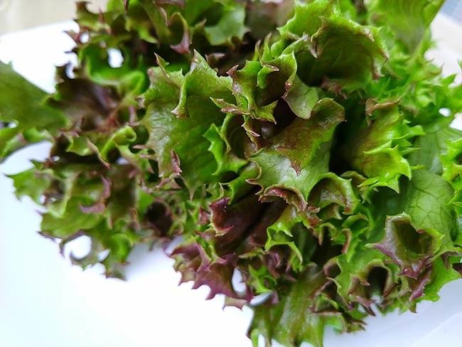 水耕蔬菜7.jpg
