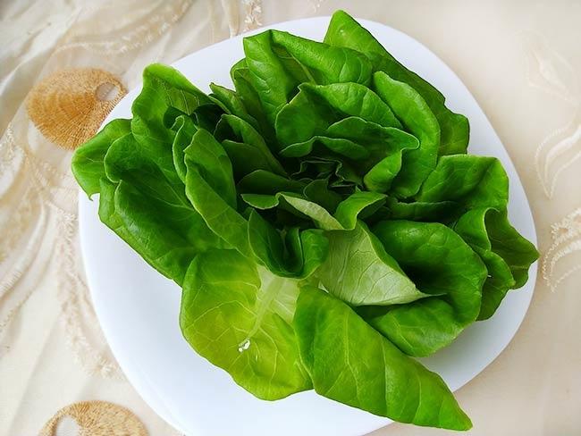 水耕蔬菜3.jpg