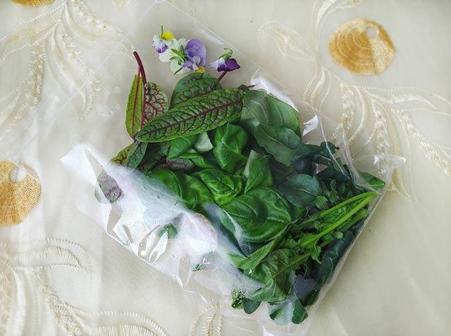 水耕蔬菜8.jpg