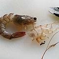 番茄蛤蜊鮮蝦湯2.jpg