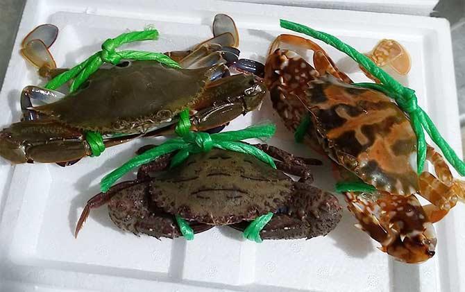 萬里蟹2.jpg