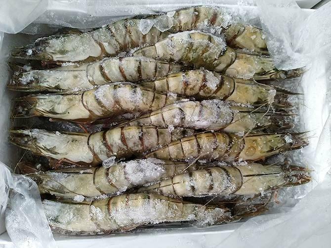 根島生態蝦2.jpg