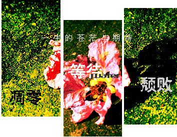 p119779729095.jpg
