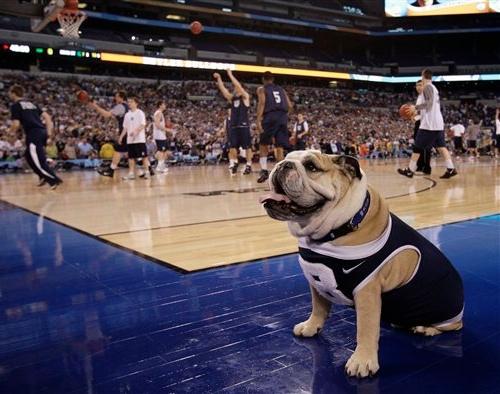 Butler-Bulldog.jpg