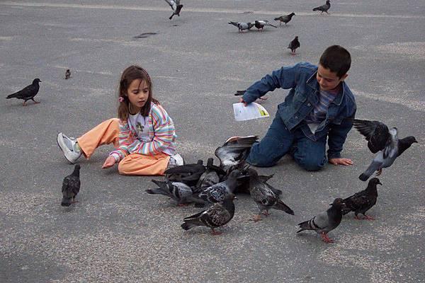 鐵塔下等待排隊小朋友跟鴿子玩起來了