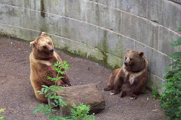 瑞士首都伯恩  Bern 熊苑    O.S