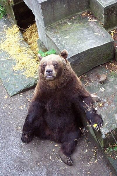 瑞士首都伯恩  Bern 熊苑