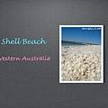 shell.001.jpg
