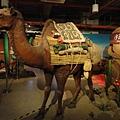 駱駝沙漠體驗區.JPG