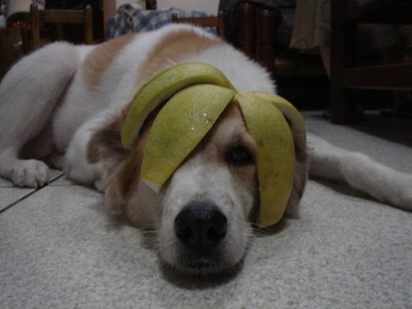 柚子節.JPG