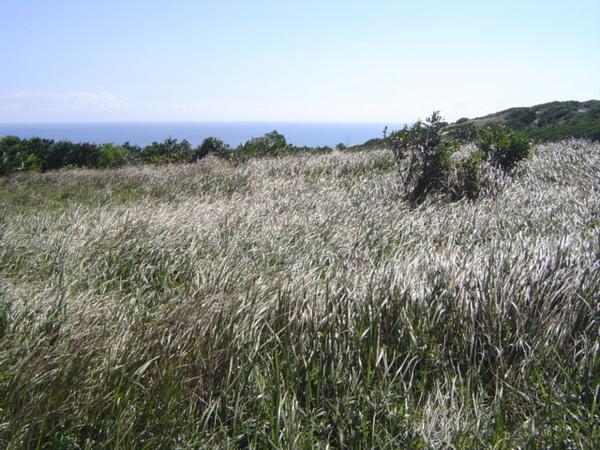 旭海大草原
