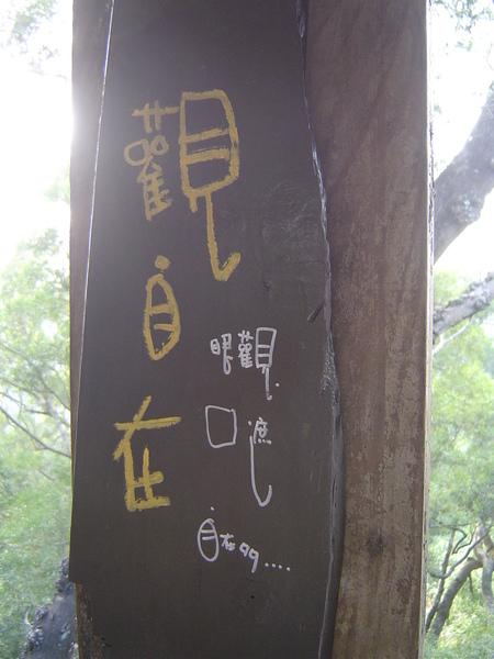 15.5號樹屋.JPG