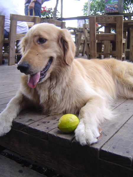 Ella與她的檸檬.JPG