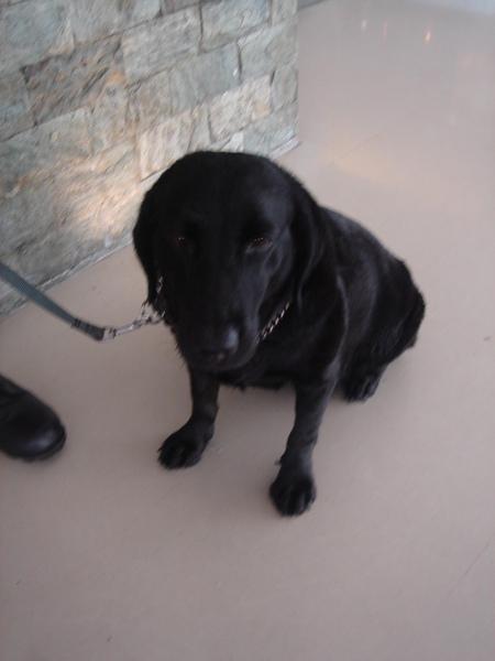 飯店門口的狗狗.JPG