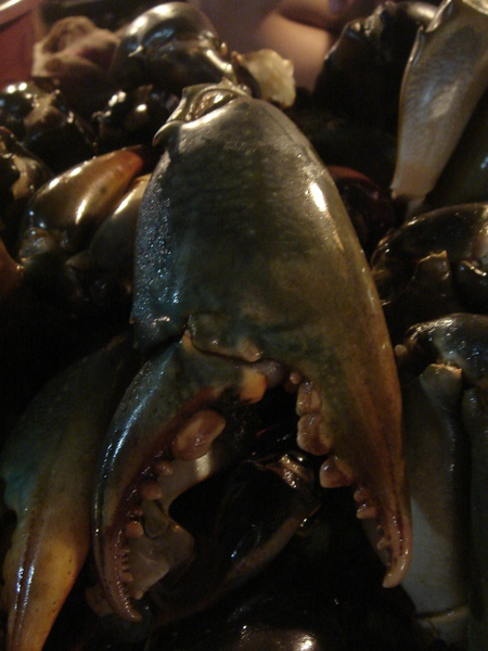 超大的螃蟹腳.JPG