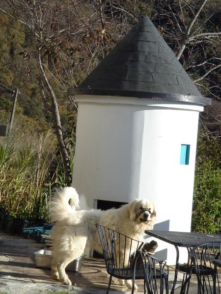大白熊與他的狗屋