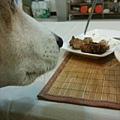 等烤雞ㄉ熊