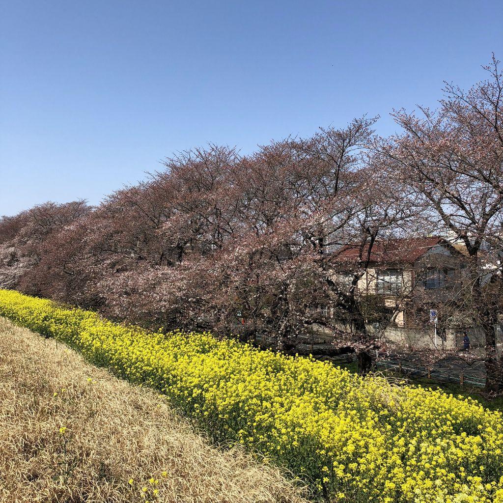 東京自由行 (11).jpg