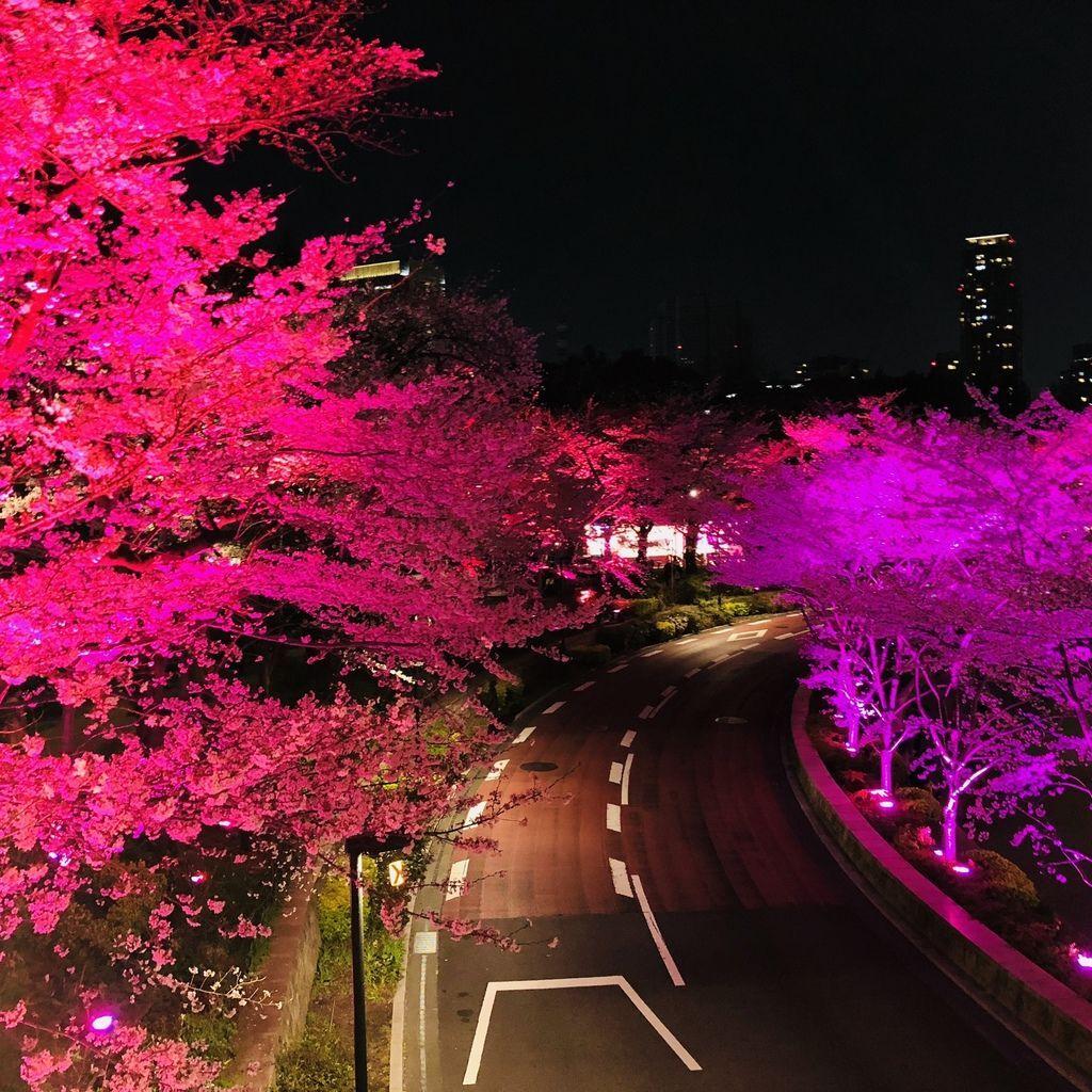 東京自由行 (42).jpg