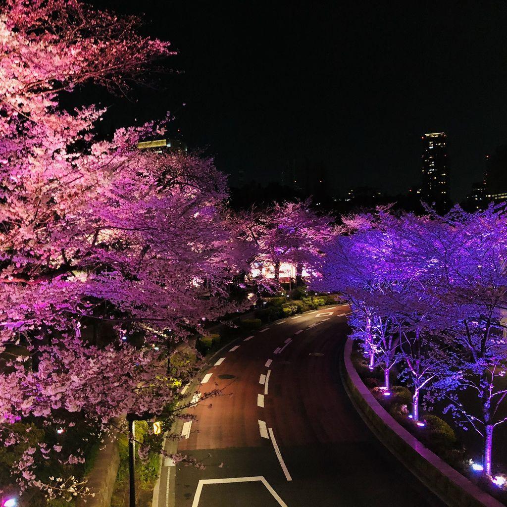 東京自由行 (43).jpg