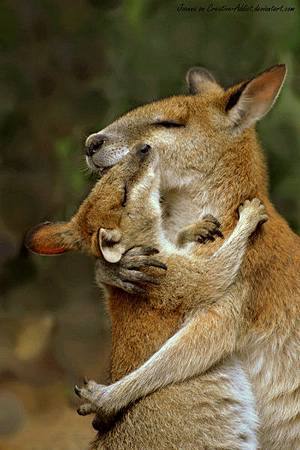 mother_and_baby_wallaby_hug_by_creative_addict-d365g91.jpg