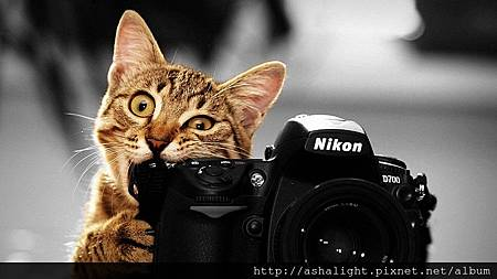 cat_with_cam_selective_color_by_chrishatez-d4gkfiz