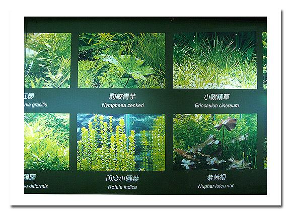 展示廳另邊的魚類展示5.jpg