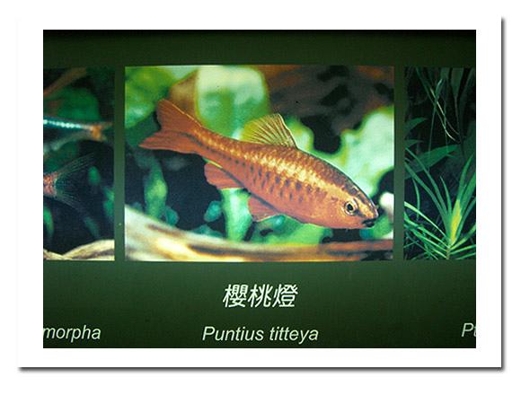 展示廳另邊的魚類展示4.jpg