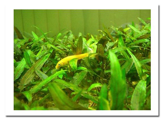 展示廳另邊的魚類展示2.jpg