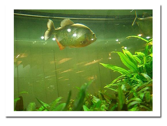 展示廳另邊的魚類展示3.jpg