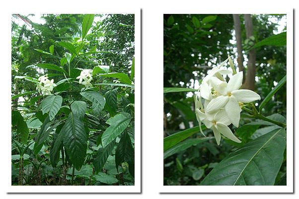 植物園的花.jpg