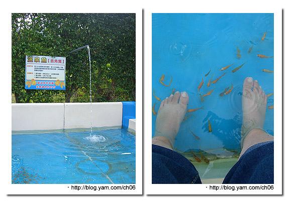 童年渡假村-溫泉魚二.jpg