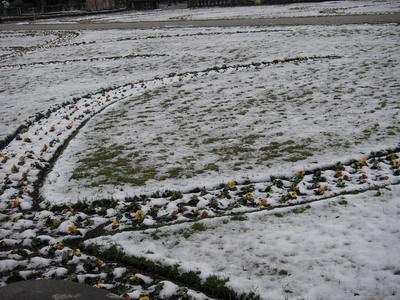 被雪覆蓋的可愛小花