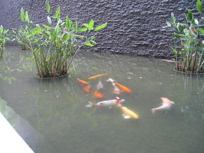 近看鯉魚還挺肥的呢(笑)