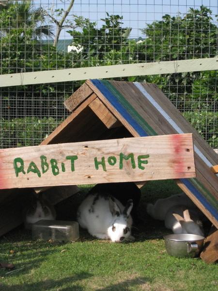 裡面藏了3隻兔子