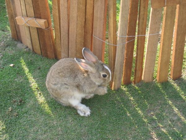 傳說中的彼得兔(像嗎?)