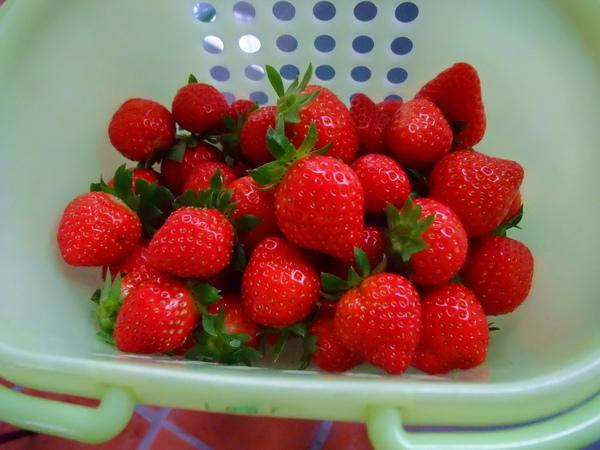 那裡的草莓都很漂釀