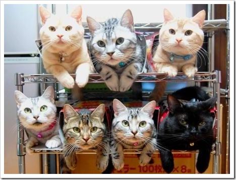 貓收納.jpg
