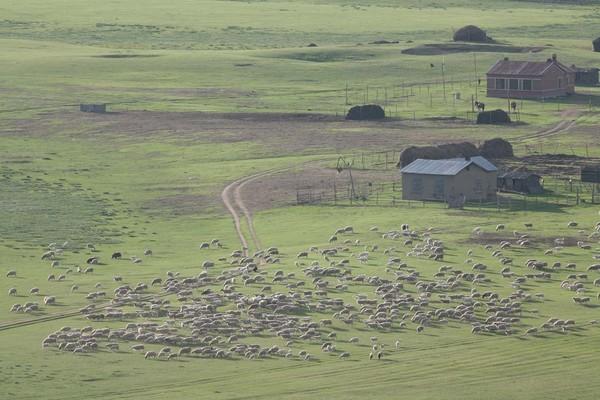 呼倫貝爾草原2