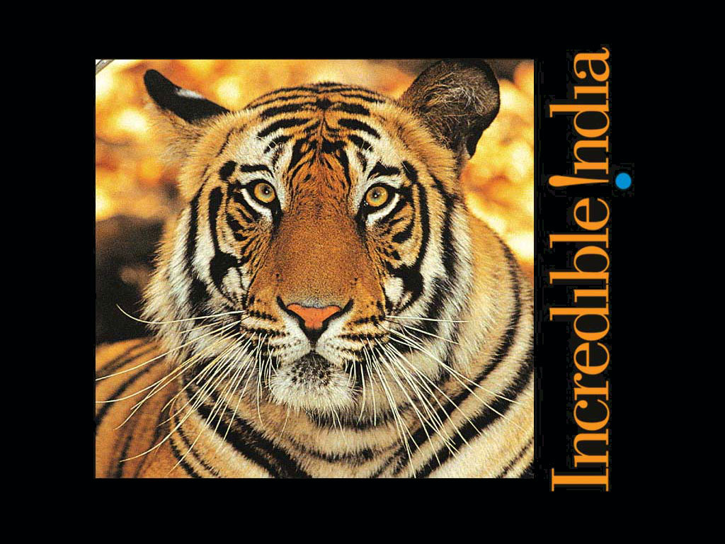 tigerincredibleindia_1024