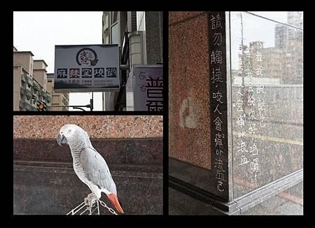 老先覺鸚鵡